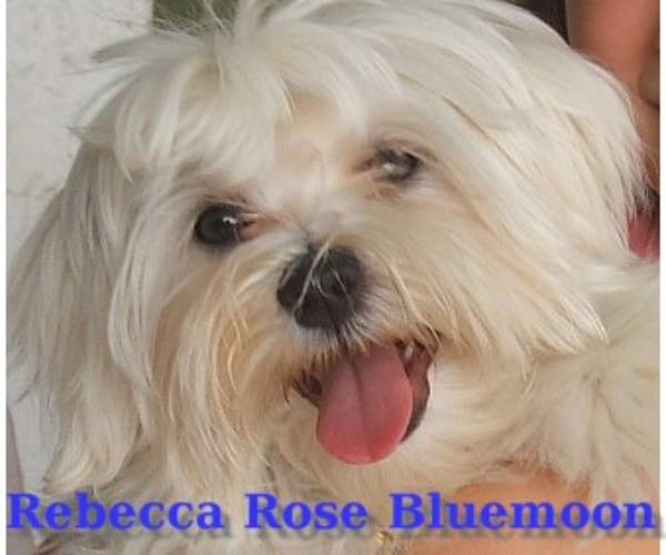 http://www.ibiscoblu.it/wordpress/wp-content/uploads/2018/03/REBECCA-ROSE-BLUEMOON-SINPHONY-OF-VENICE-MAYA-X-SINPHONY-OF-VENICE-FABULOUSE-MELODY-600x500.jpg
